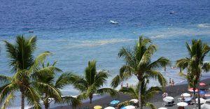 algen kust la palma