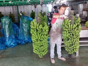 bananen.lapalma